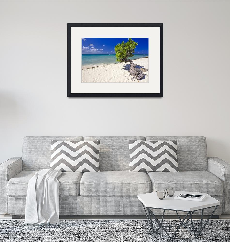 """""""Lone Divi Tree on the Beach""""  (2008) by George_Oze"""