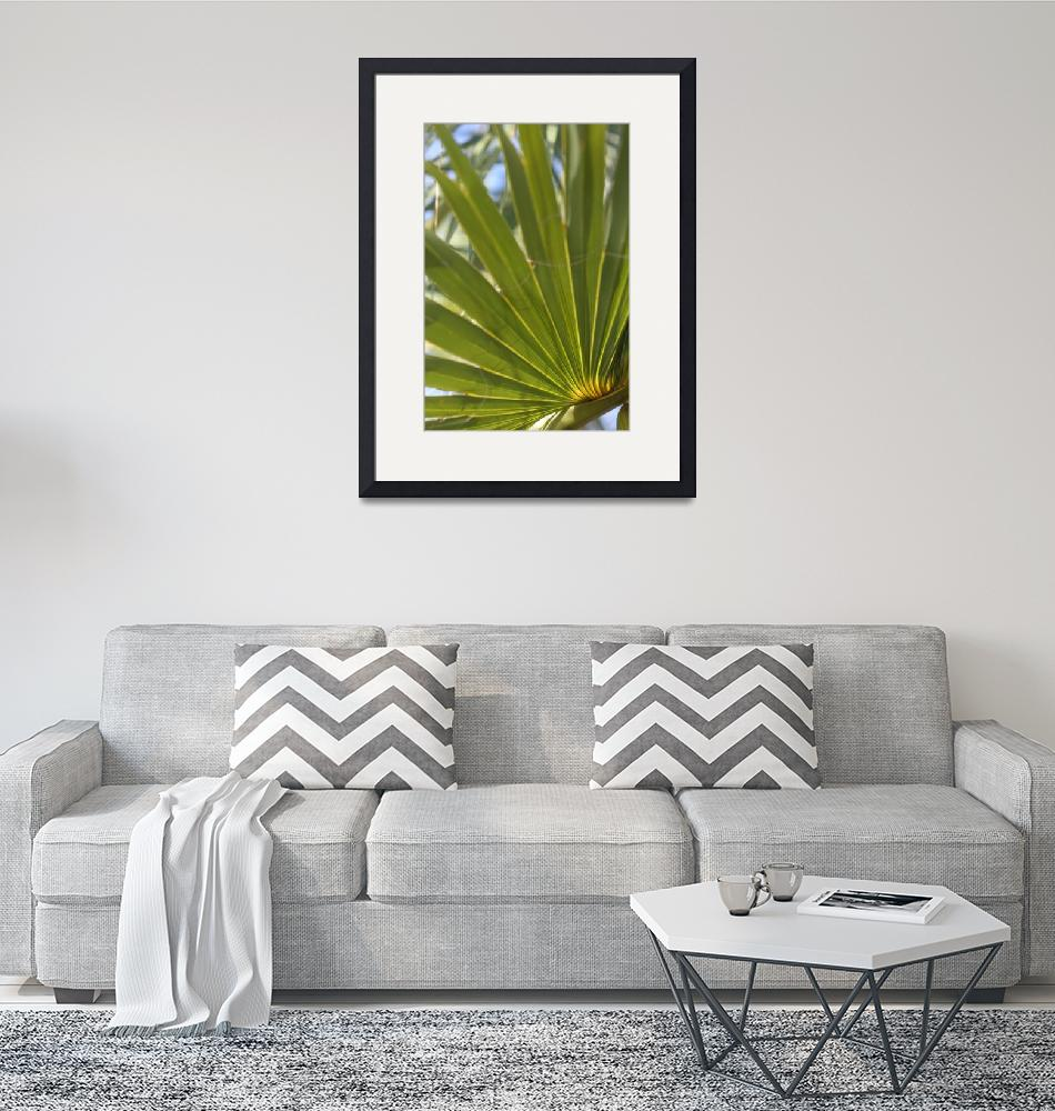 """Palmetto""  by danreedphotography"