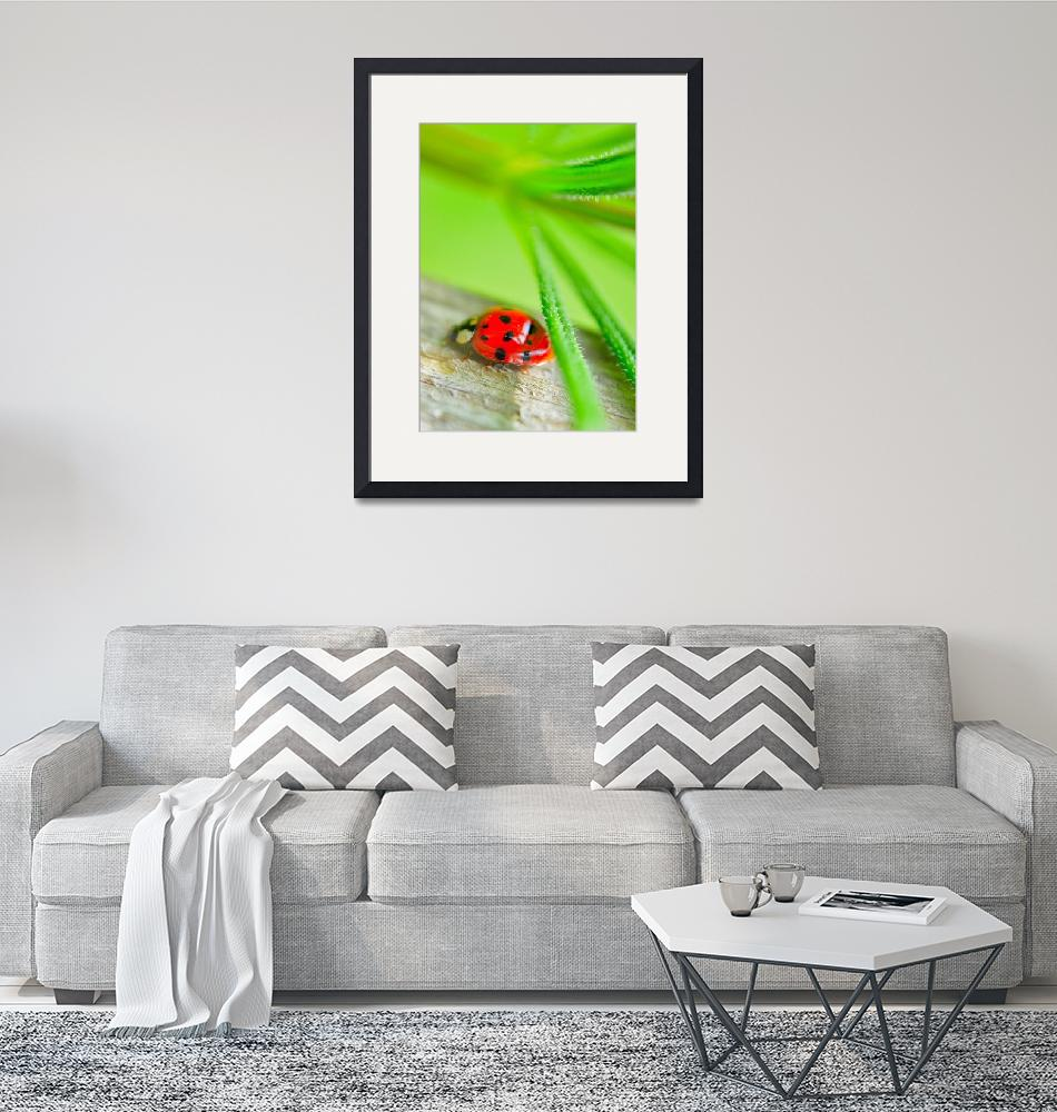 """""""Ladybug3"""" (2014) by Anique_Bazil"""