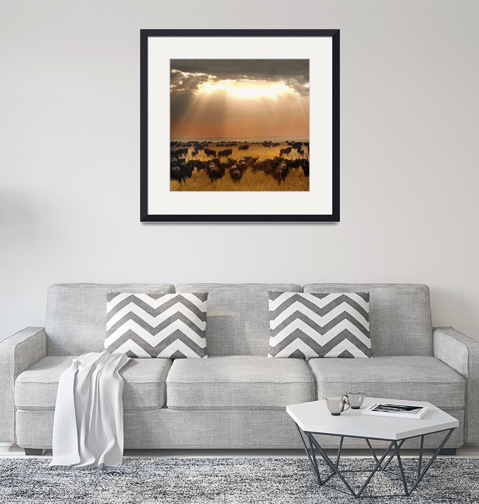 """""""Wildebeest on a field at sunset""""  by Panoramic_Images"""