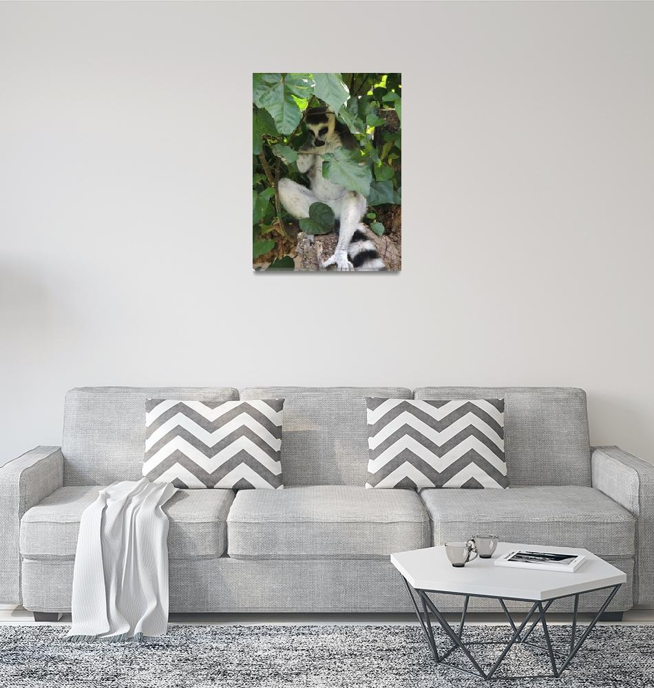 """Ringtailed lemur""  by SandraBinghamNature"