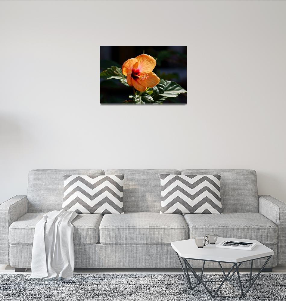 """Orange Flower""  (2010) by Andrea_Donaldson"