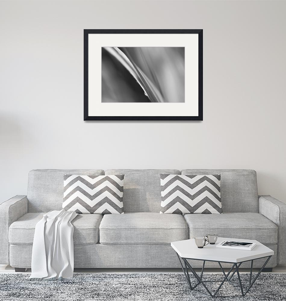 """""""Black and White Abstract - Sole Waterdrop in Grass""""  (2015) by NatalieKinnear"""