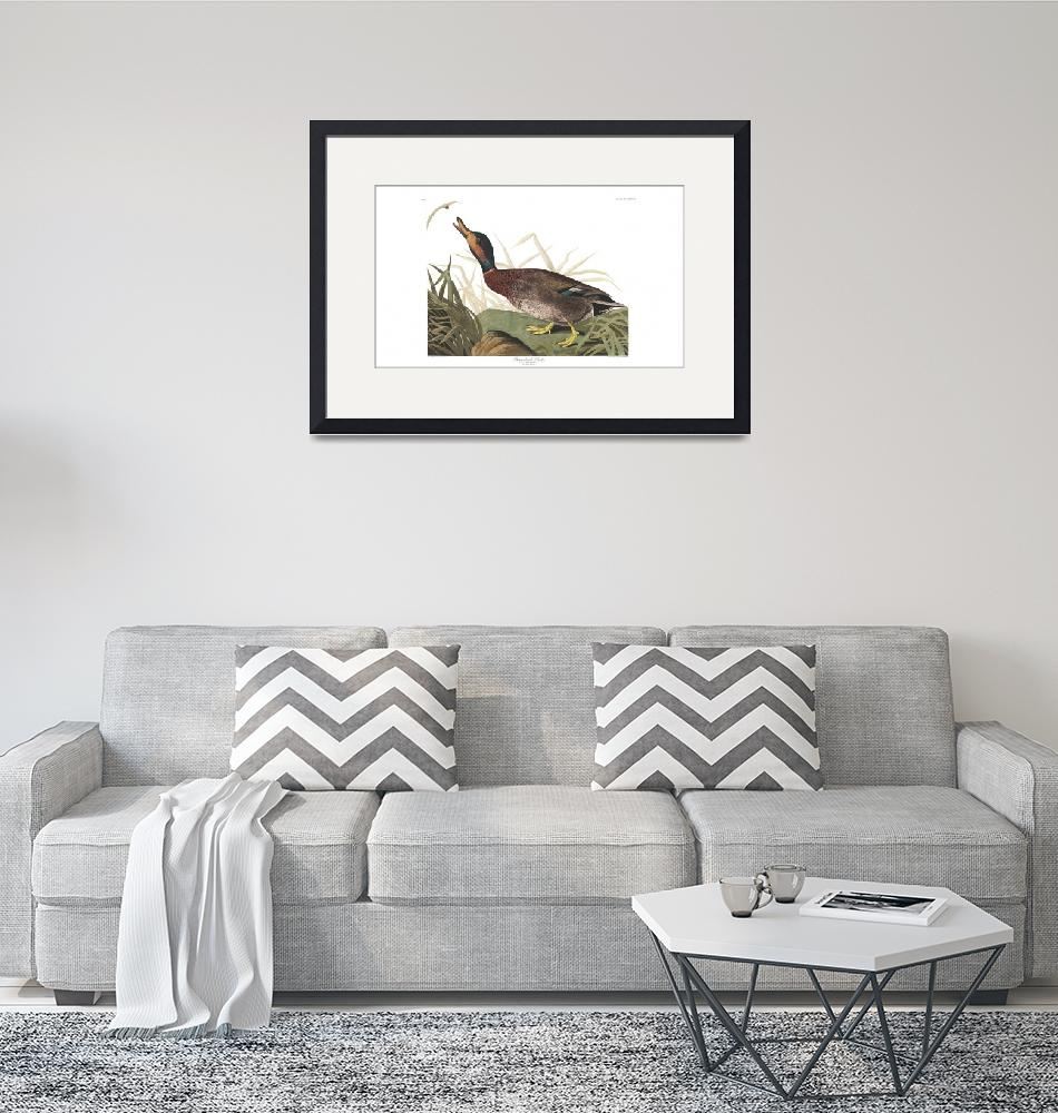 """""""Bemaculated Duck, Plate 338""""  by FineArtClassics"""