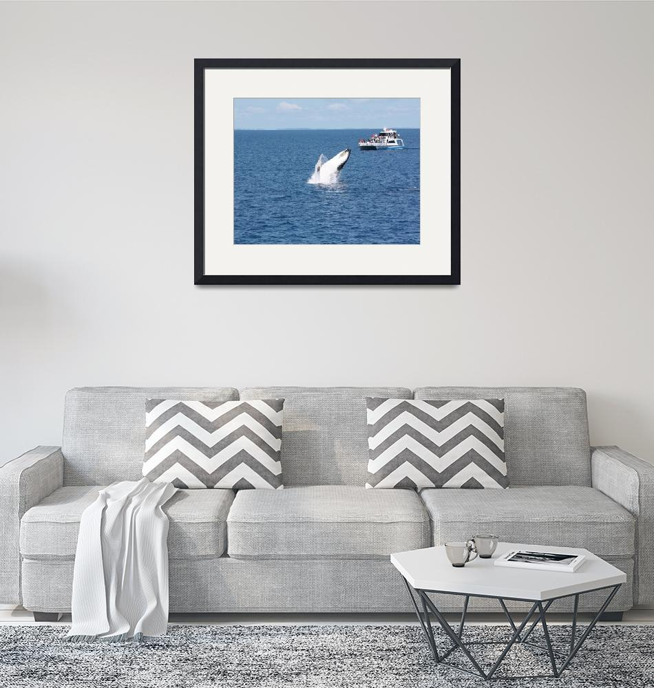 """NaP_ Whale Watching168a""  by nevilleprosser"