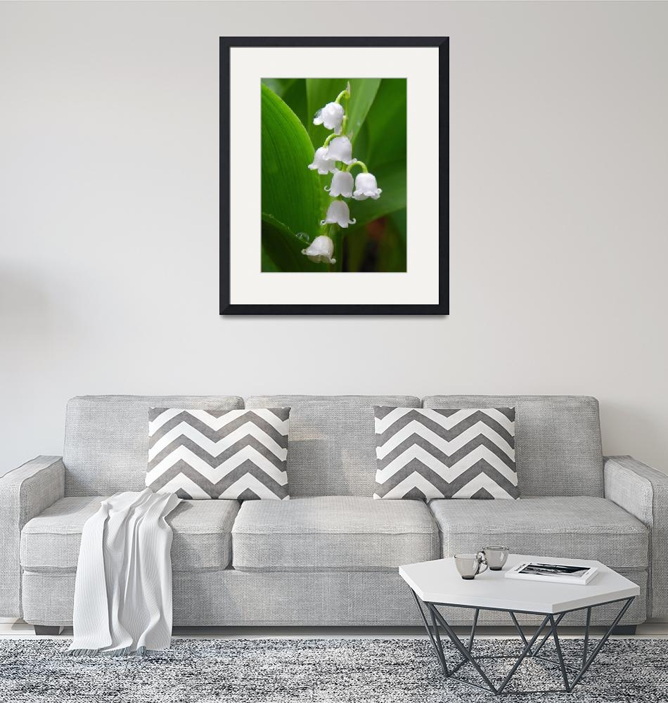 """Lily of the valley""  (2013) by vpicks"