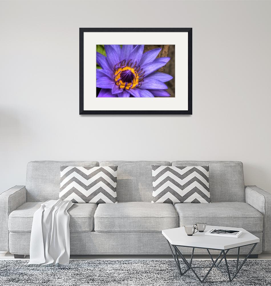 """""""Purple Lotus""""  by spinfly"""