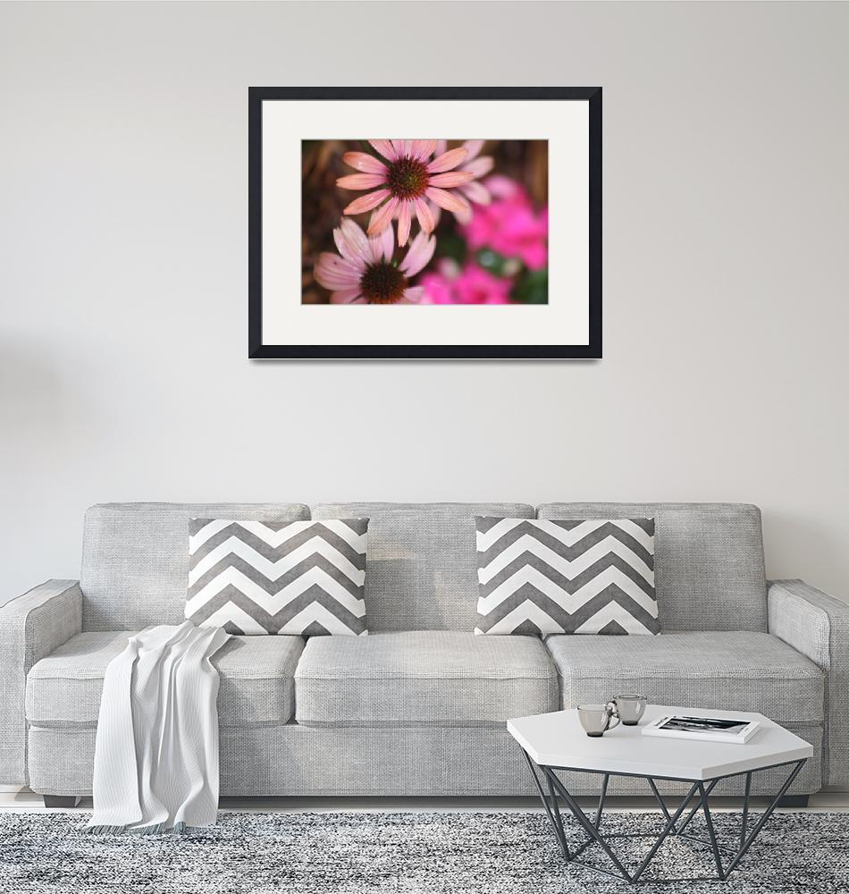 """""""Pink Cone Flowers""""  (2010) by nadinerippelmeyer"""