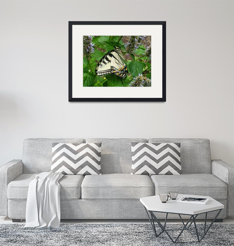 """""""Swallowtail on the Anise Hyssop""""  (2010) by teenolan"""