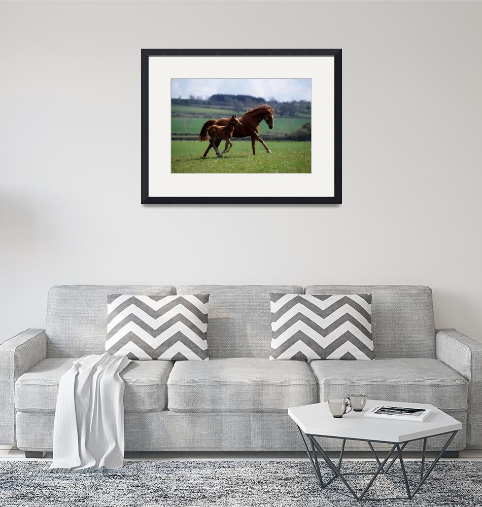 """Thoroughbred Mare""  by DesignPics"