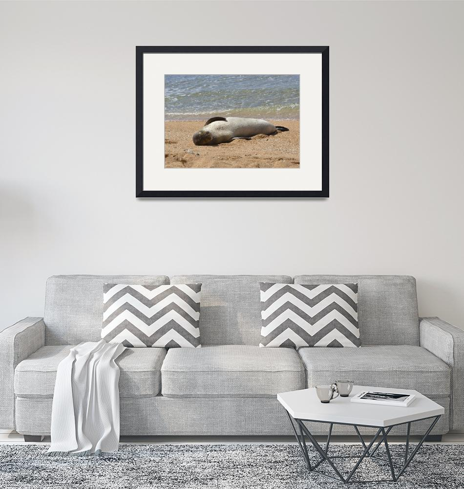 """Monk Seal Napping at Tunnels Beach""  by postcardmoments"