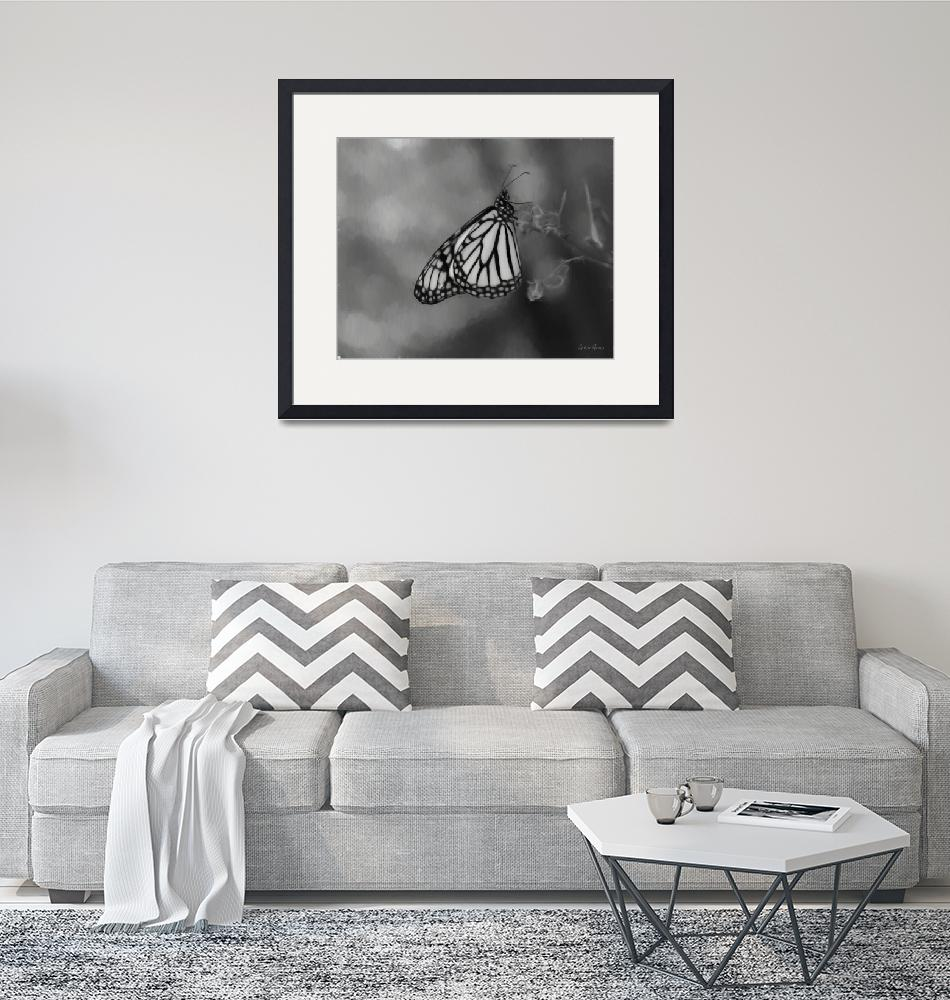 """""""Monarch in Black and White""""  (2019) by LouiseReeves"""
