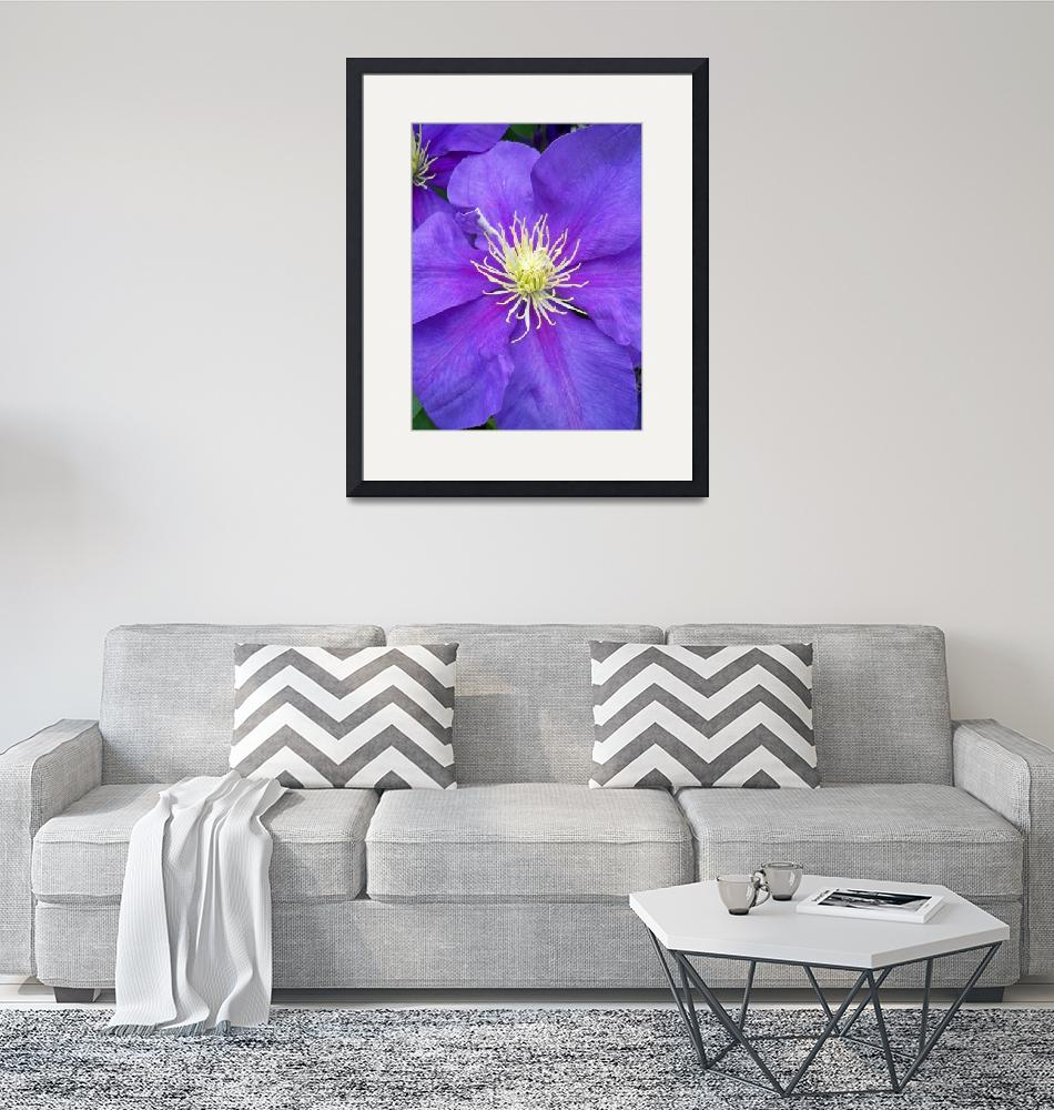 """Clematis""  (2010) by GrayEyes"