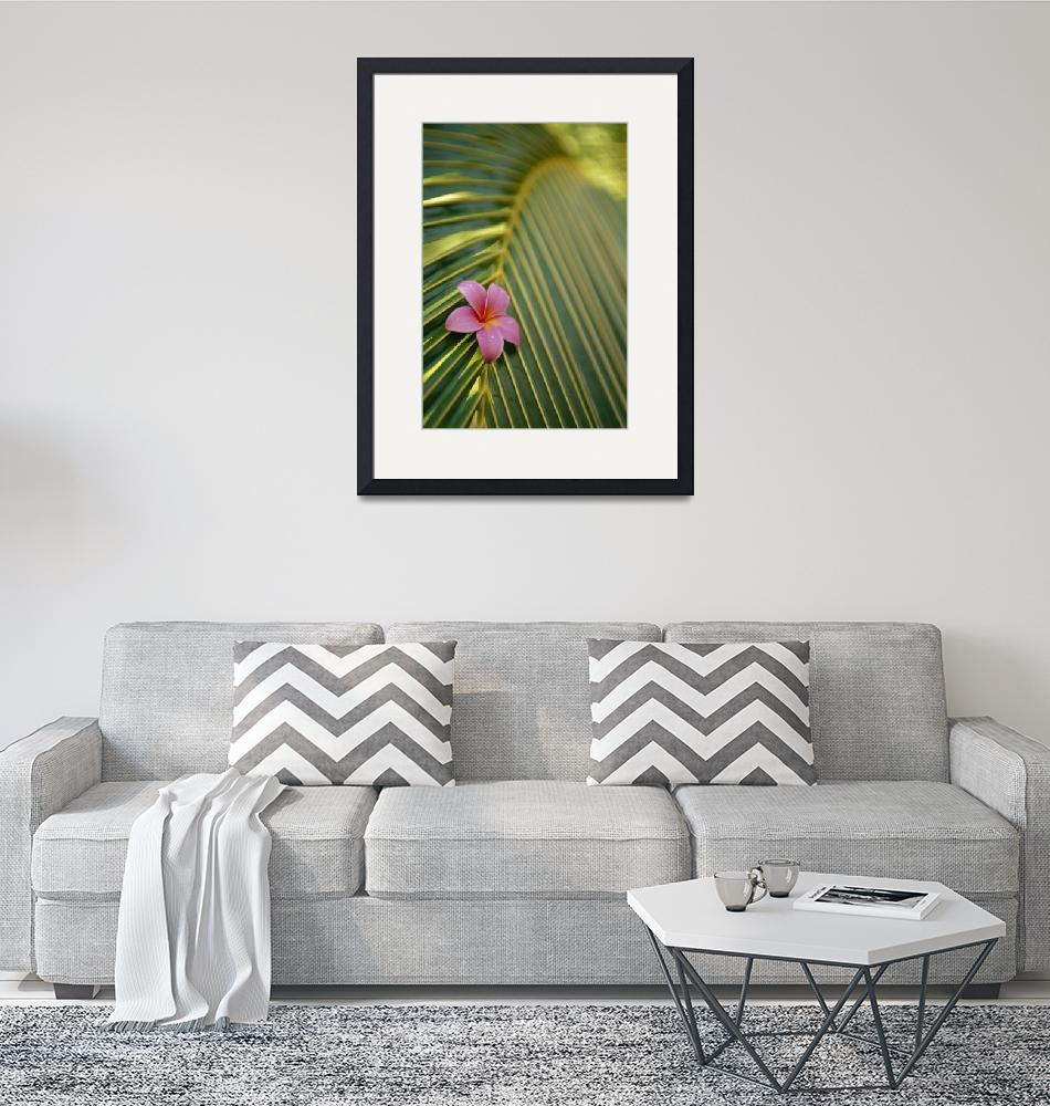 """Close-Up Angled View Of One Pink Plumeria On Cocon""  by DesignPics"