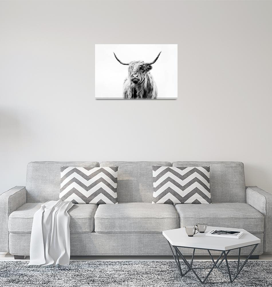 """""""portrait of a highland cow""""  (2011) by doritfuhgphotography"""