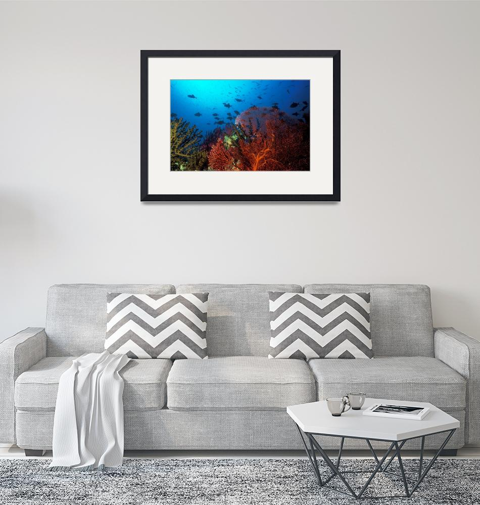 """""""Coral reef scene, Solomon Islands (#0025764)""""  (2004) by Triggerfish_Images"""