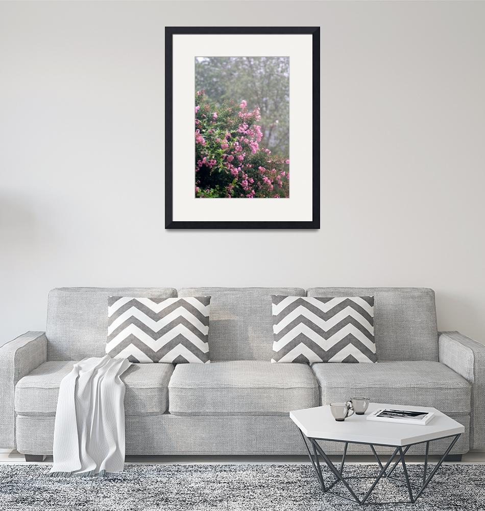 """""""Crepe Myrtle Robed in Pink""""  (2008) by nadinerippelmeyer"""