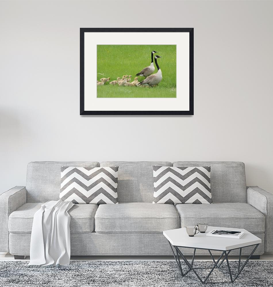 """""""Two Adult Canada Geese and a Gaggle of Goslings""""  (2012) by rhamm"""