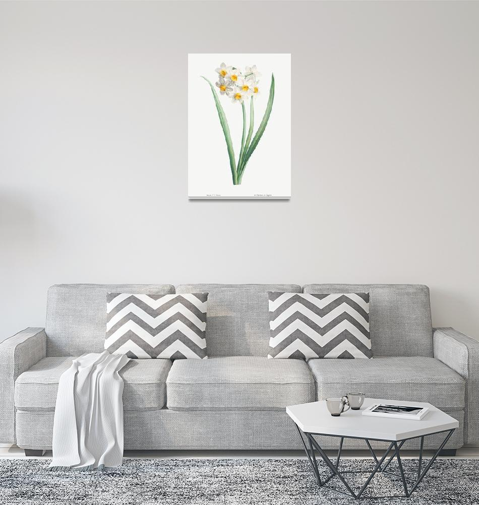 """""""Narcissus Vintage Botanical""""  by FineArtClassics"""