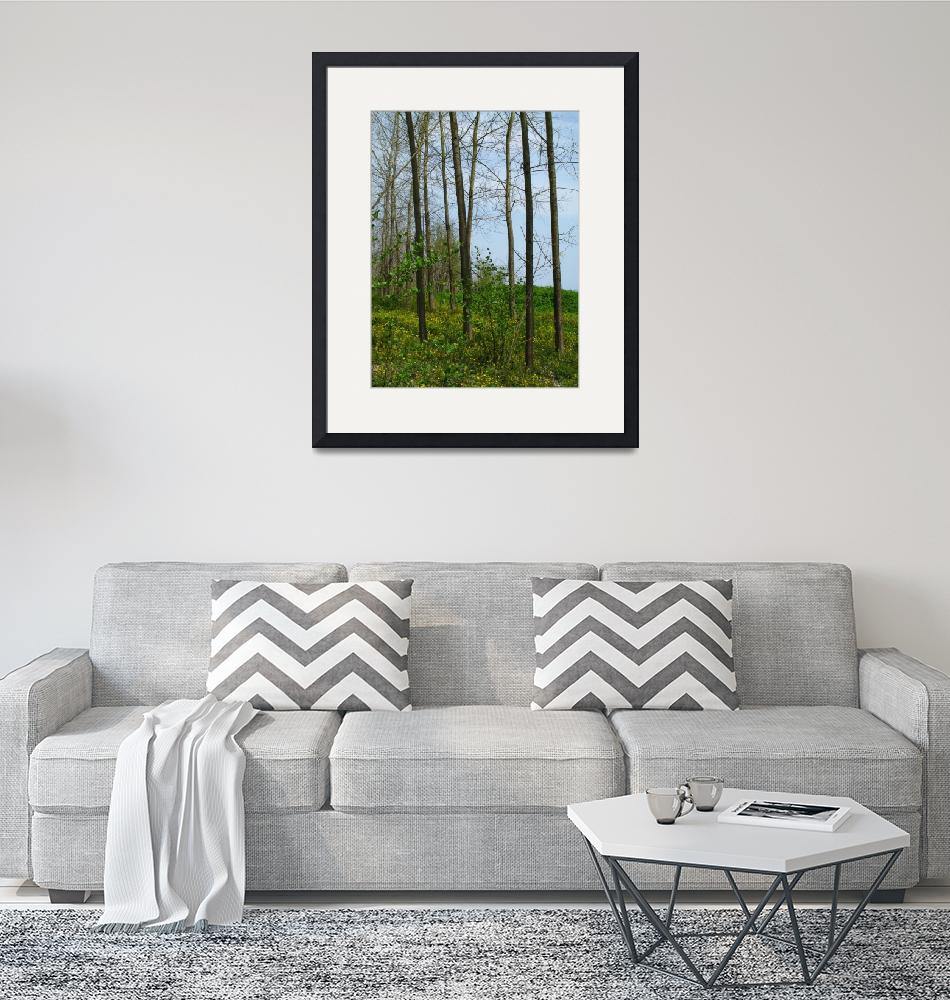 """""""Forest""""  by Shervin"""