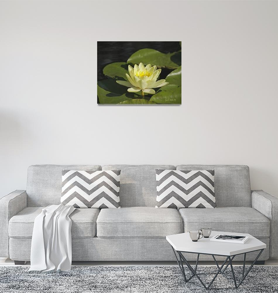 """Water Lily Meditation Wall Art""  (2017) by PhotographsByCarolFAustin"