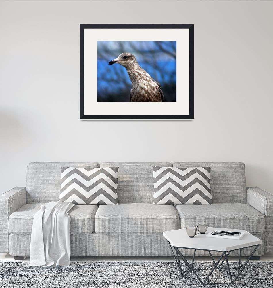 """""""Hey you! Gull""""  (2009) by NatureScenes"""