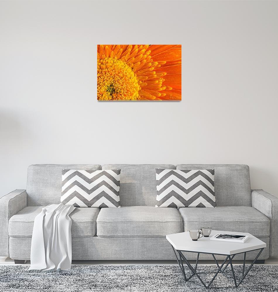 """Orange Macro world""  by scatani"