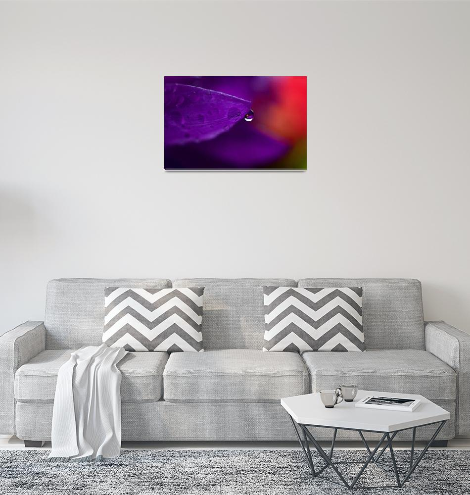 """""""Water Drop Reflections With Purple II""""  (2011) by LauraM"""