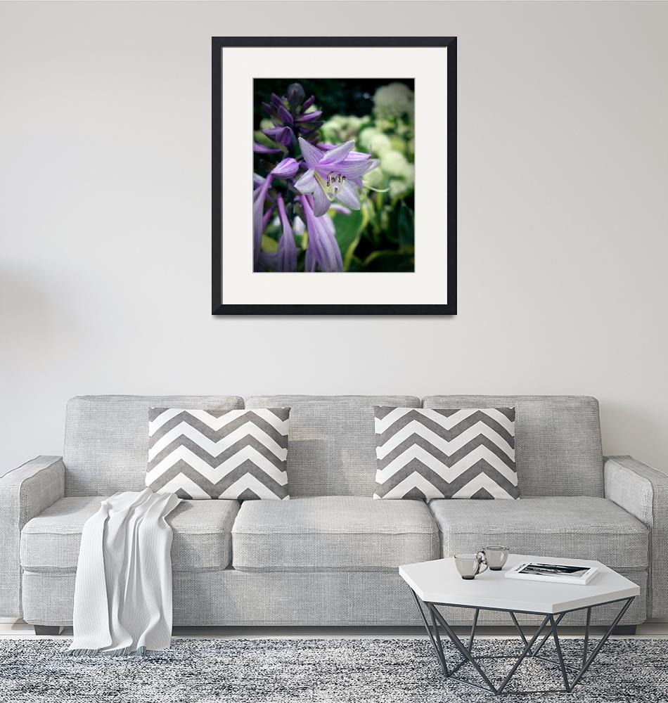 """Flowering Hosta""  (2011) by rewards4life"