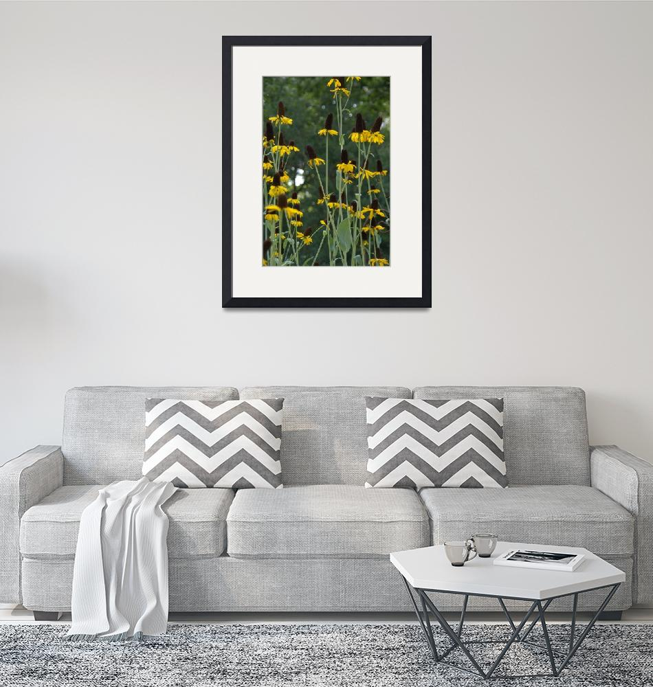 """""""Yellow Cone Flowers""""  (2009) by victoriazeoli"""