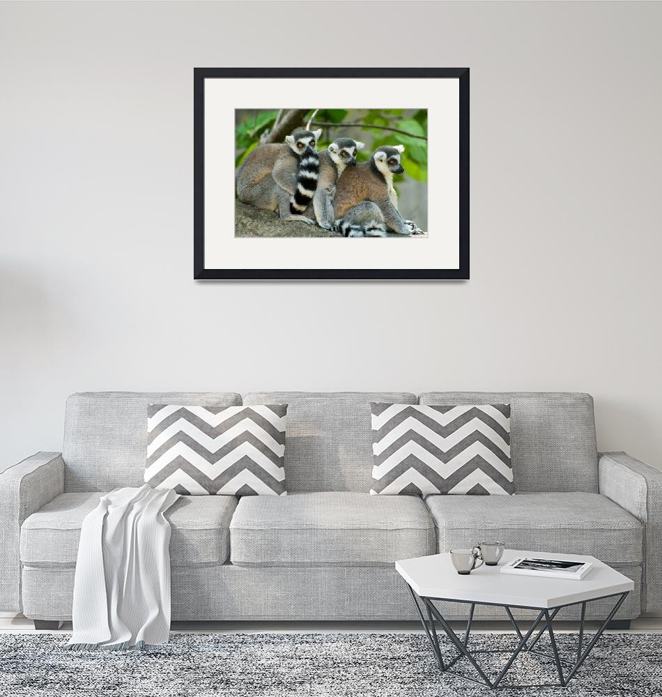 """Ring-tailed lemurs 1""  (2009) by nicolevaughan"