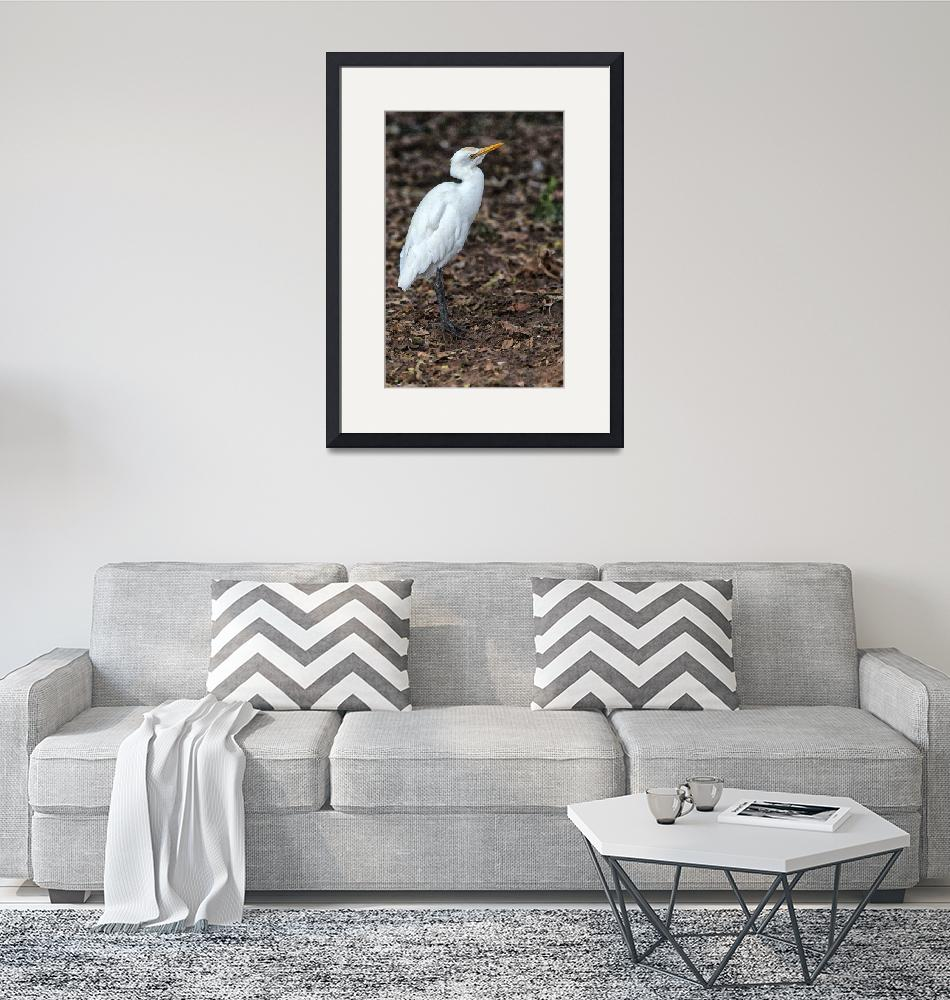 """""""Profile of a Cattle Egret_2""""  (2012) by SivamDesign"""
