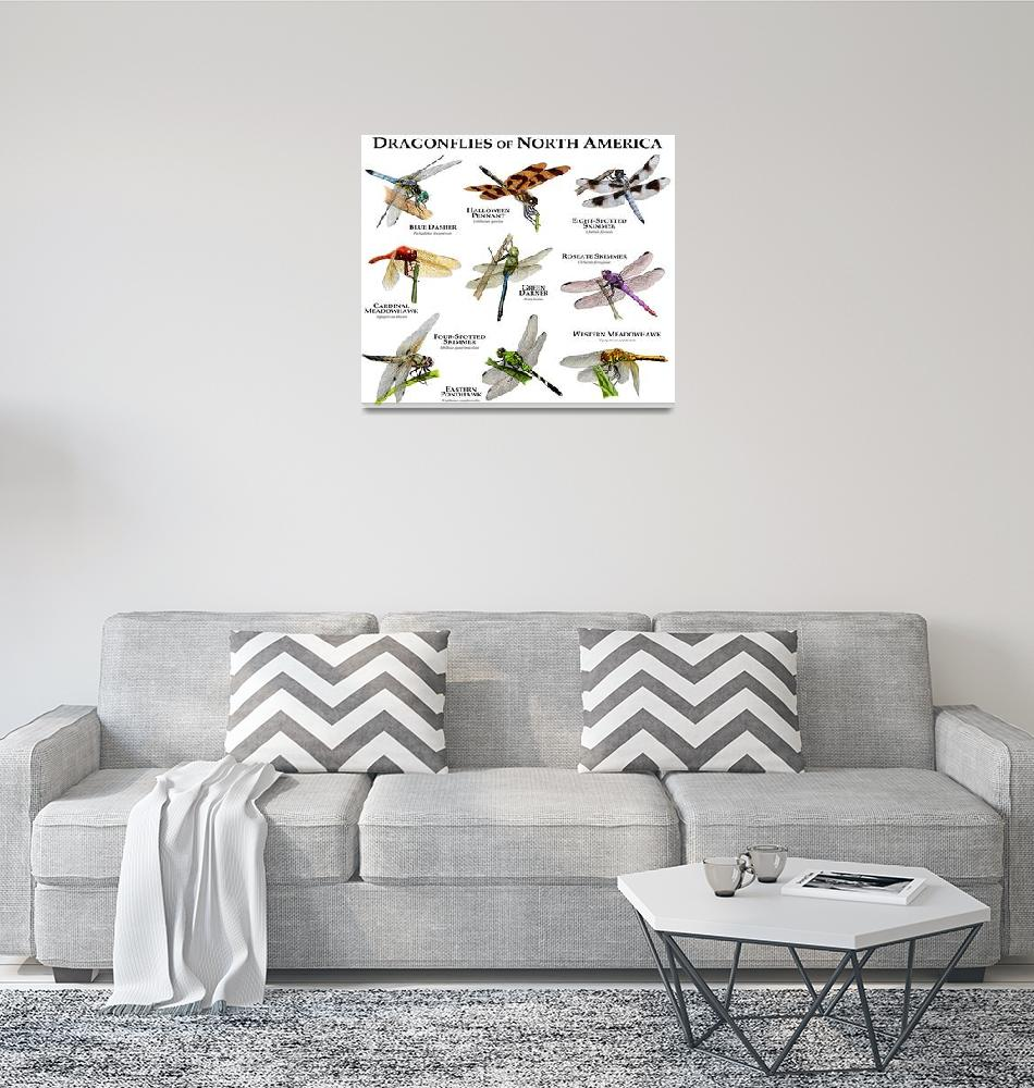 """""""Dragonflies of North America""""  by inkart"""