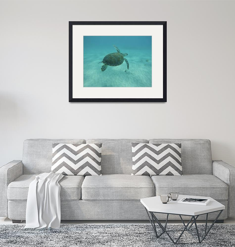 """""""Graceful Green Sea Turtle in St. Martin, Caribbean""""  (2020) by c2graphics"""