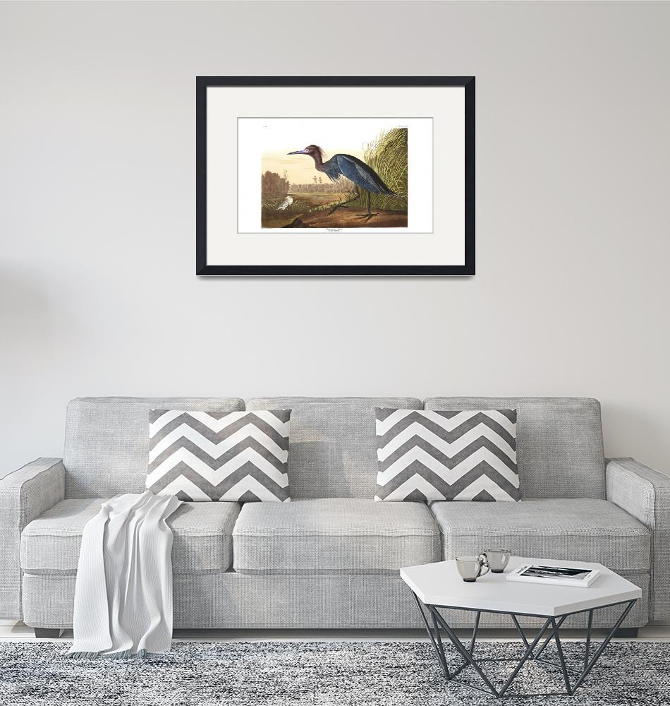 """Blue Crane or Heron, Plate 307""  by FineArtClassics"