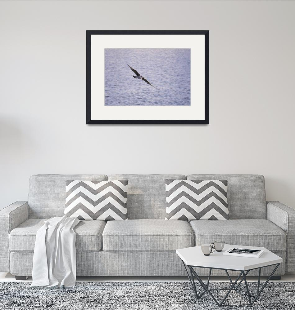 """""""A dream of seagull or seagull of dream ?""""  by BobM"""
