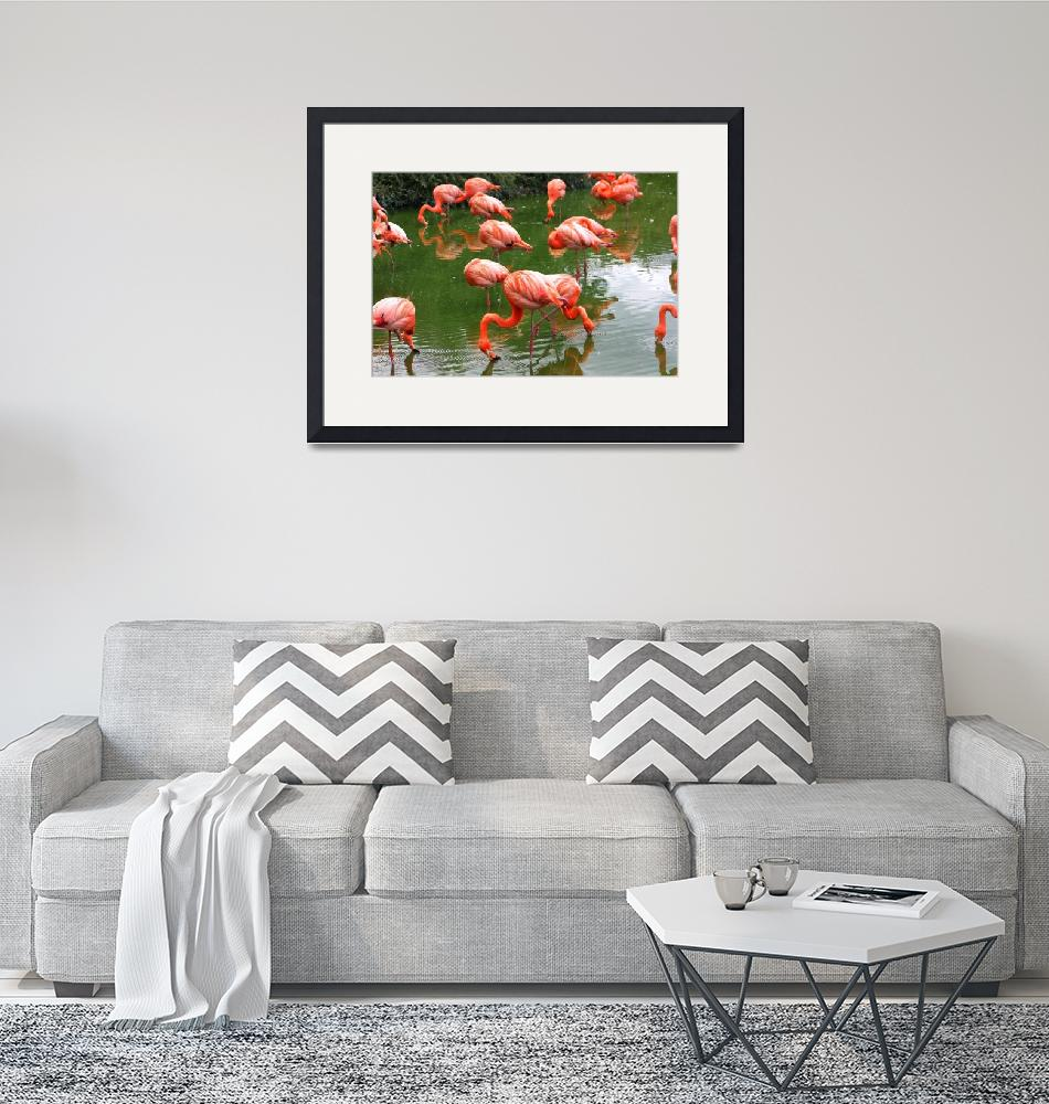"""Flamingos""  (2008) by jdmphotography1"