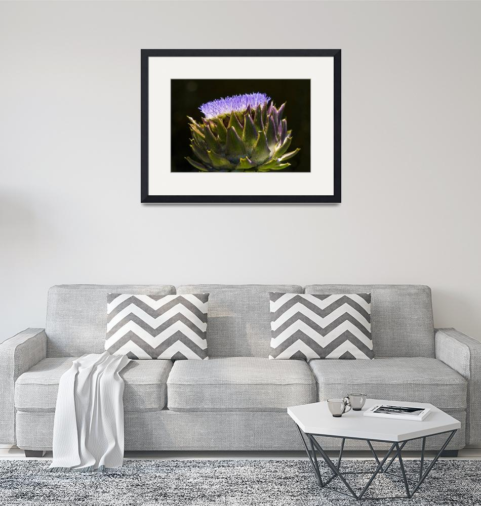 """Artichoke in Bloom""  (2009) by RHudsonPhotographicImages"