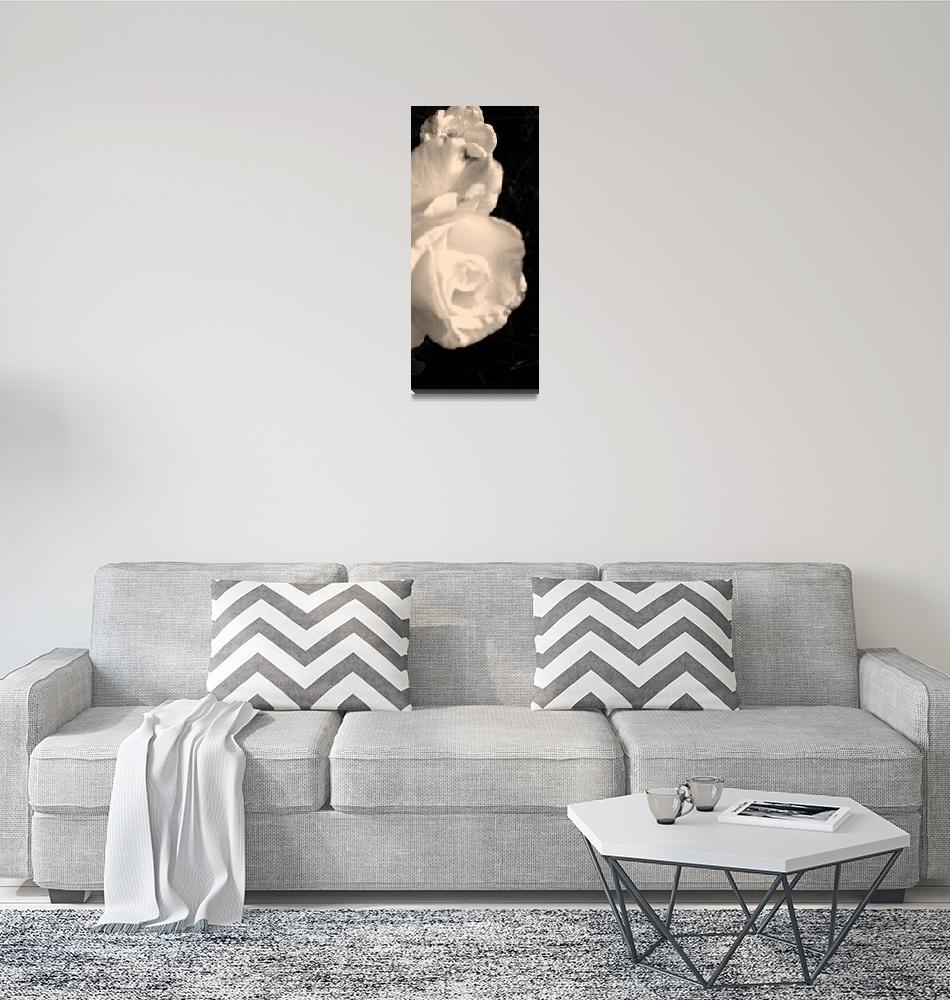 """Queen Rose""  (2009) by LesaFisher-Artworks"