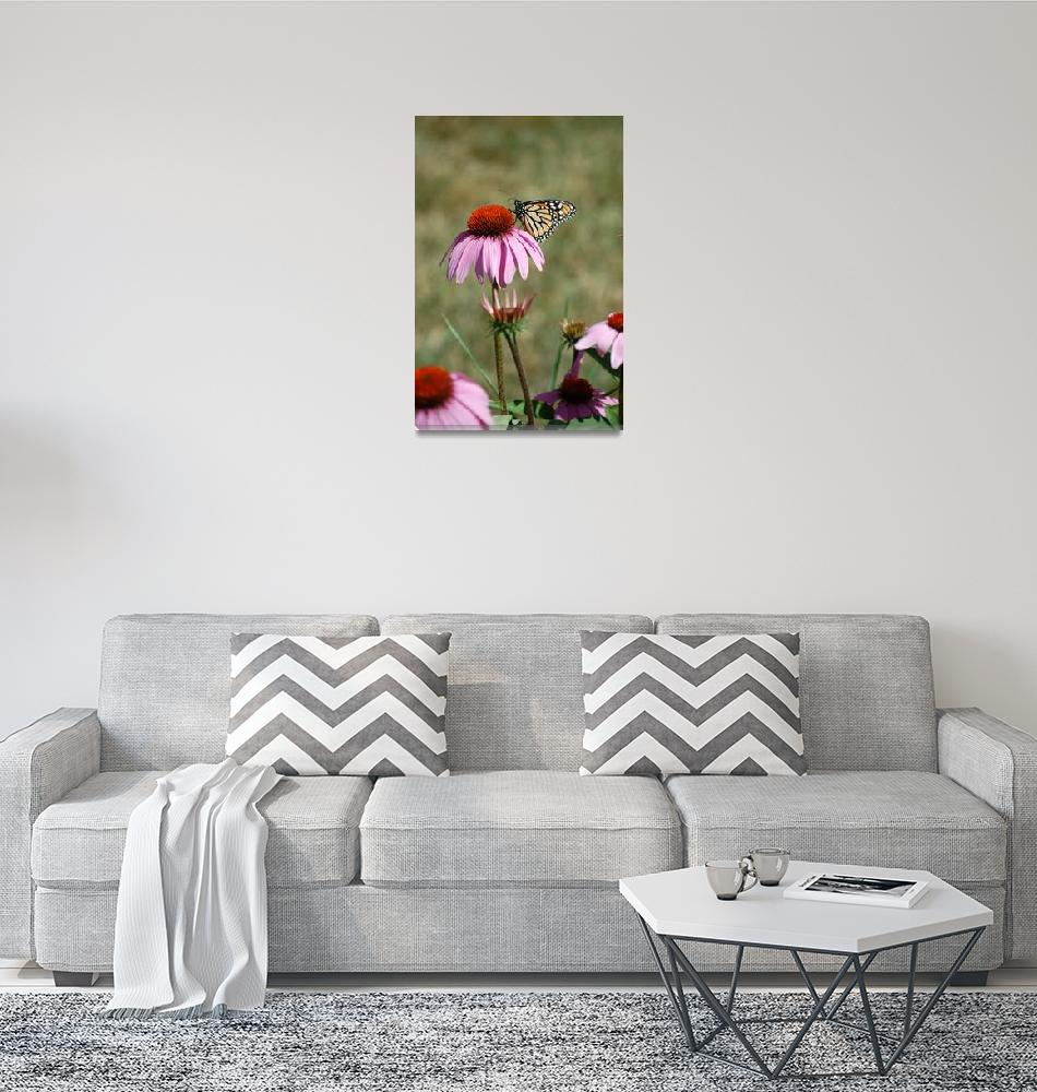 """""""Pink Black Eyed Susan and Monarch Butterfly""""  (2009) by crazyabouthercats"""