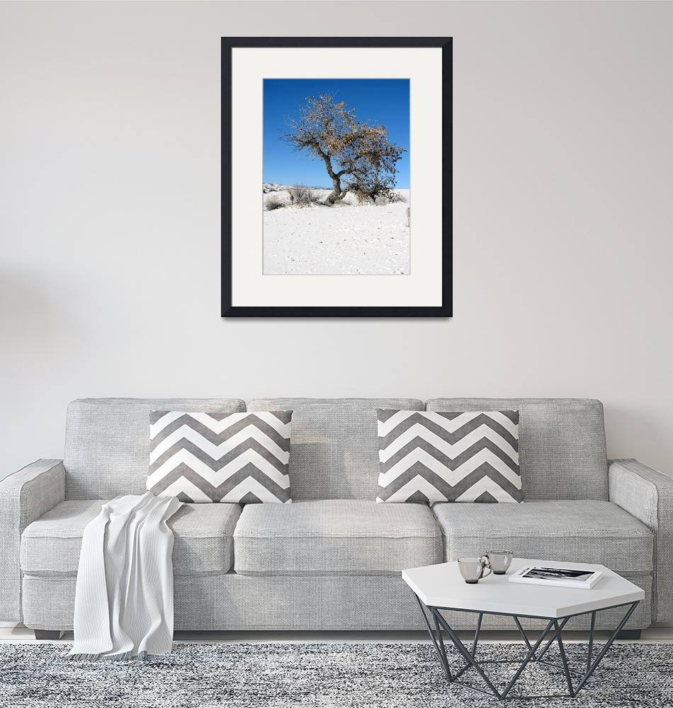 """""""Cottonwood Tree in the Dunes""""  (2008) by MarksClickArt"""