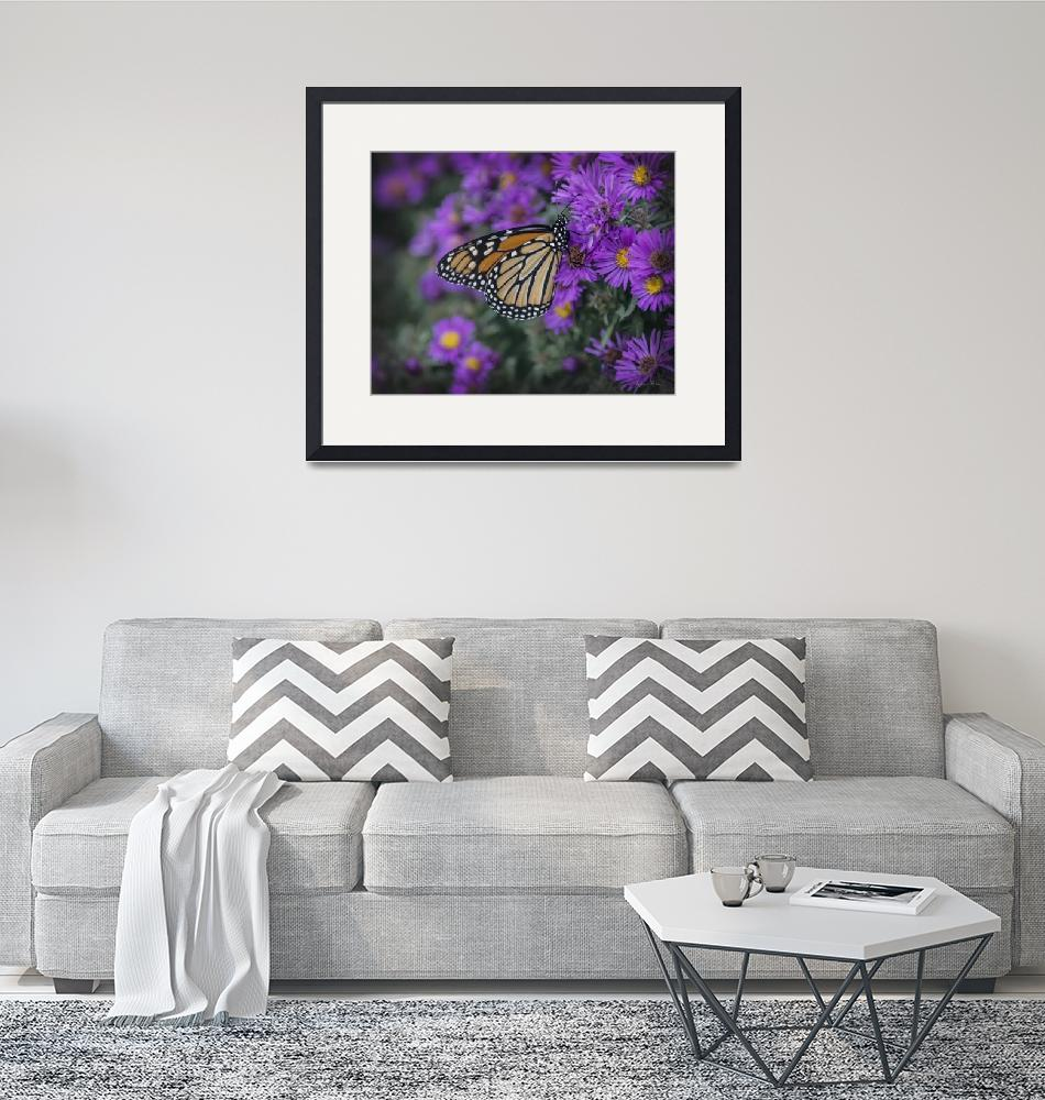 """Monarch on Mums 2""  (2019) by LouiseReeves"