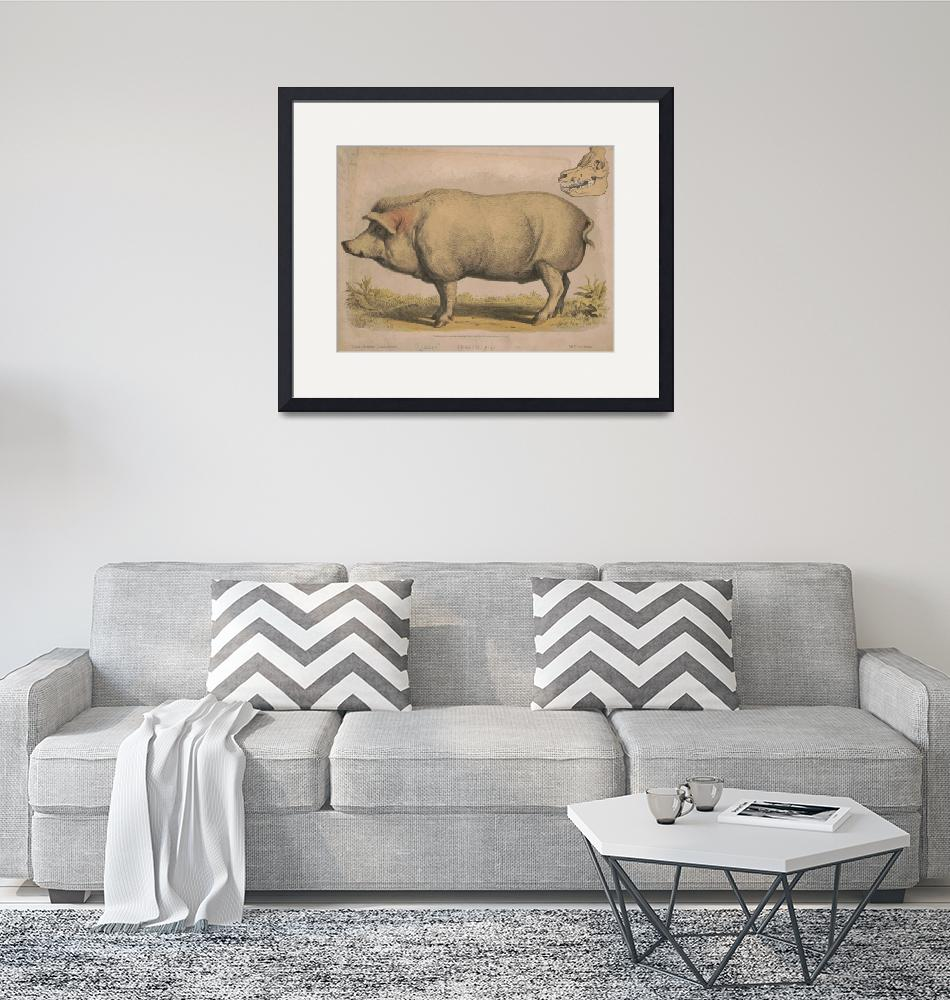 """Vintage Illustration of a Domesticated Pig (1874)""  by Alleycatshirts"