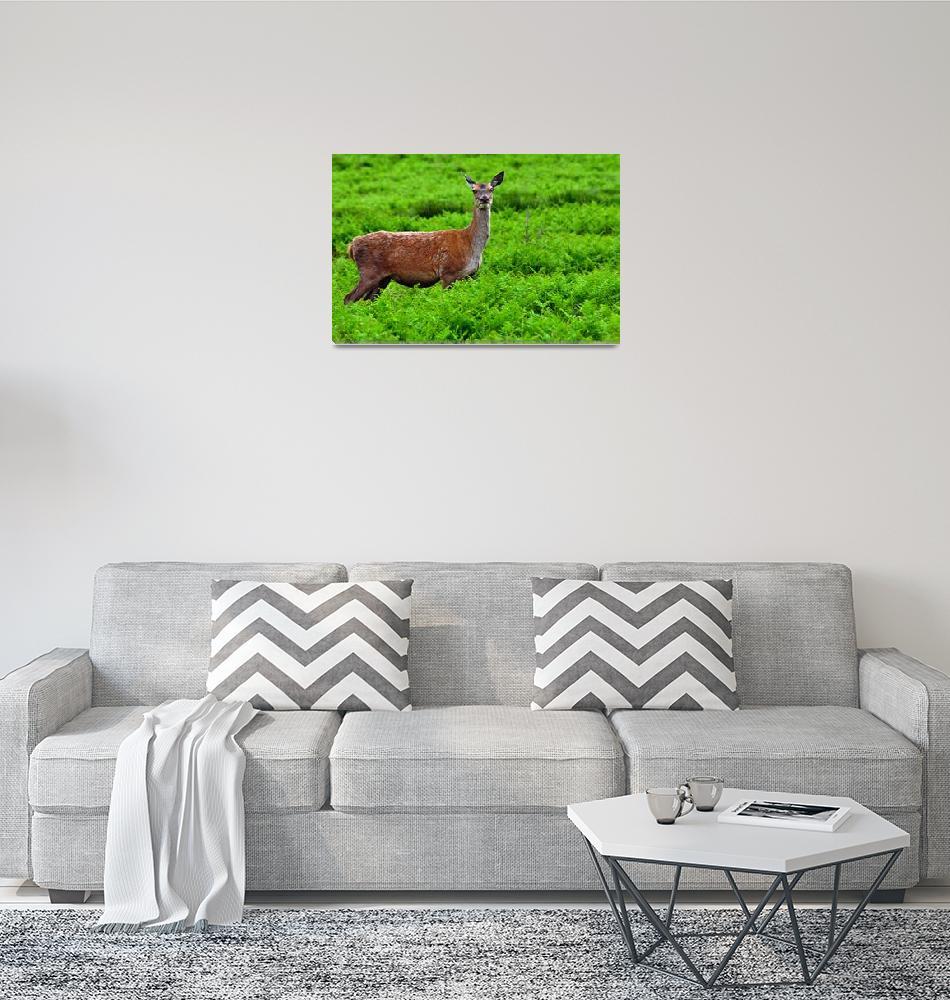 """Female Fallow Deer in Bradgate Park (17160-RAD)""  (2009) by rodjohnson"