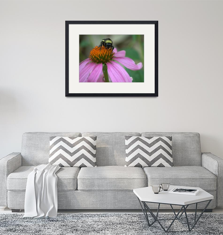 """""""Coneflower and Bumblebee""""  (2014) by TaylorMadeArtUS"""