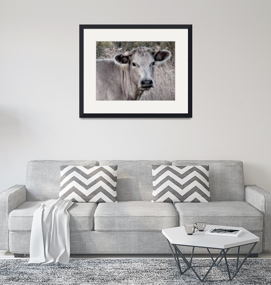 """""""Portrait of a Girly Cow""""  (2015) by anniepics"""