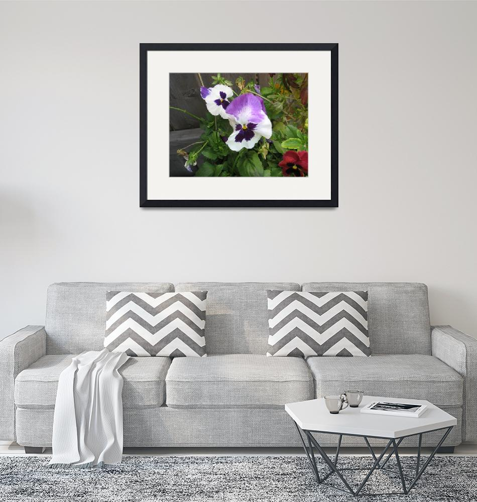 """""""Pansies""""  by DennyPhil"""