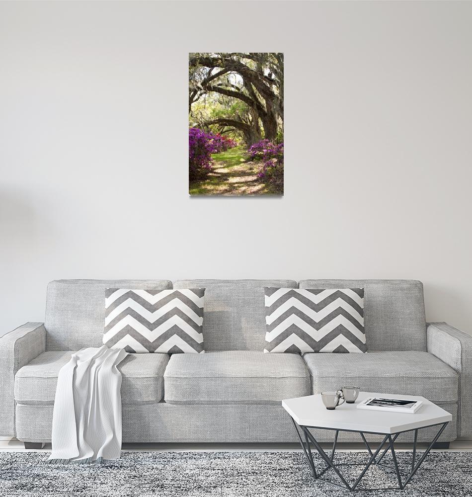 """Azeleas and Live Oaks at Magnolia Plantation""  (2010) by DustinKRyan"