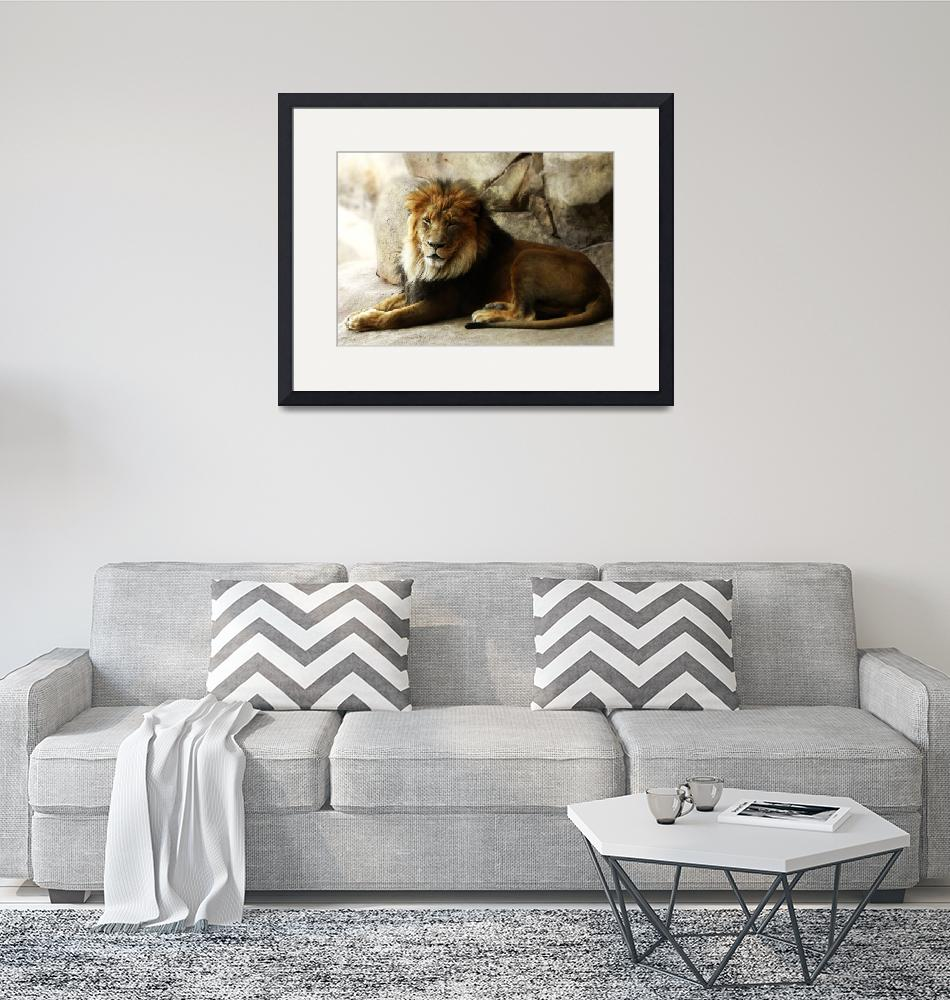 """""""Male Lion at Rest""""  (2011) by walbyent"""