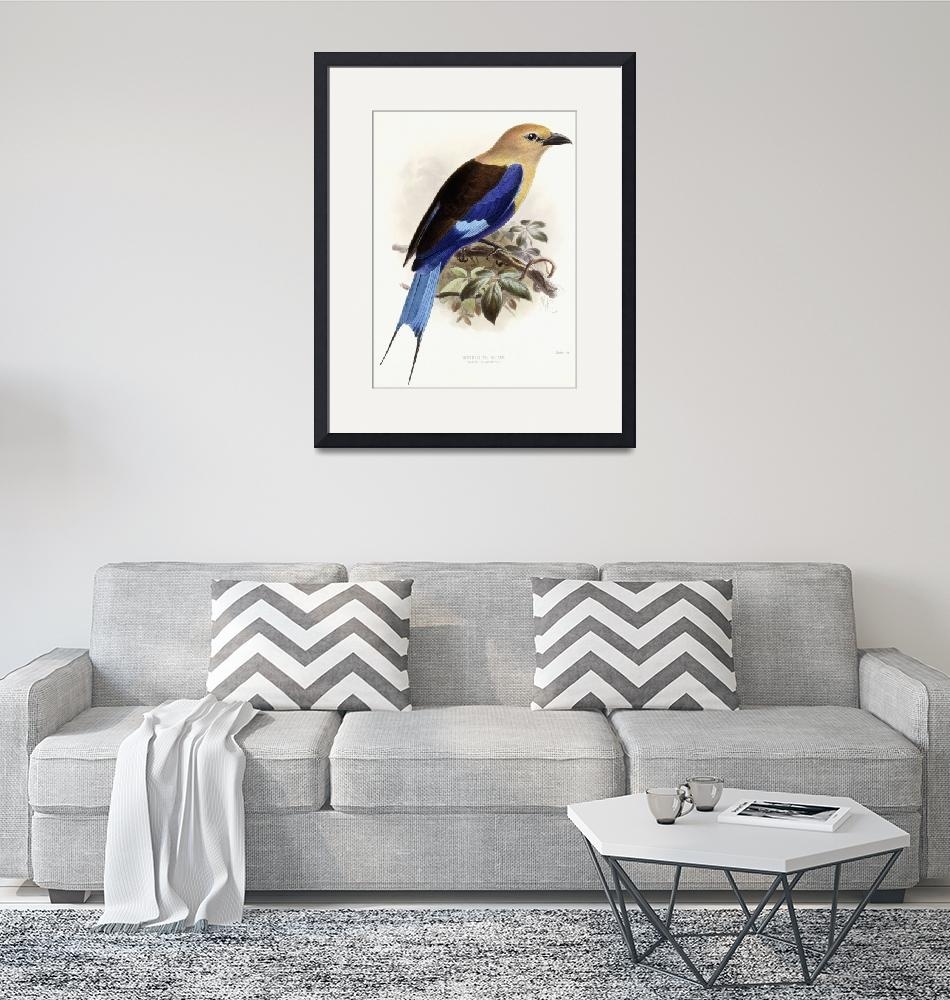 """""""Bluebellied Roller, 1893 (hand-coloured lithograph""""  by fineartmasters"""